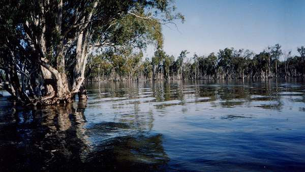 Murray River in flood