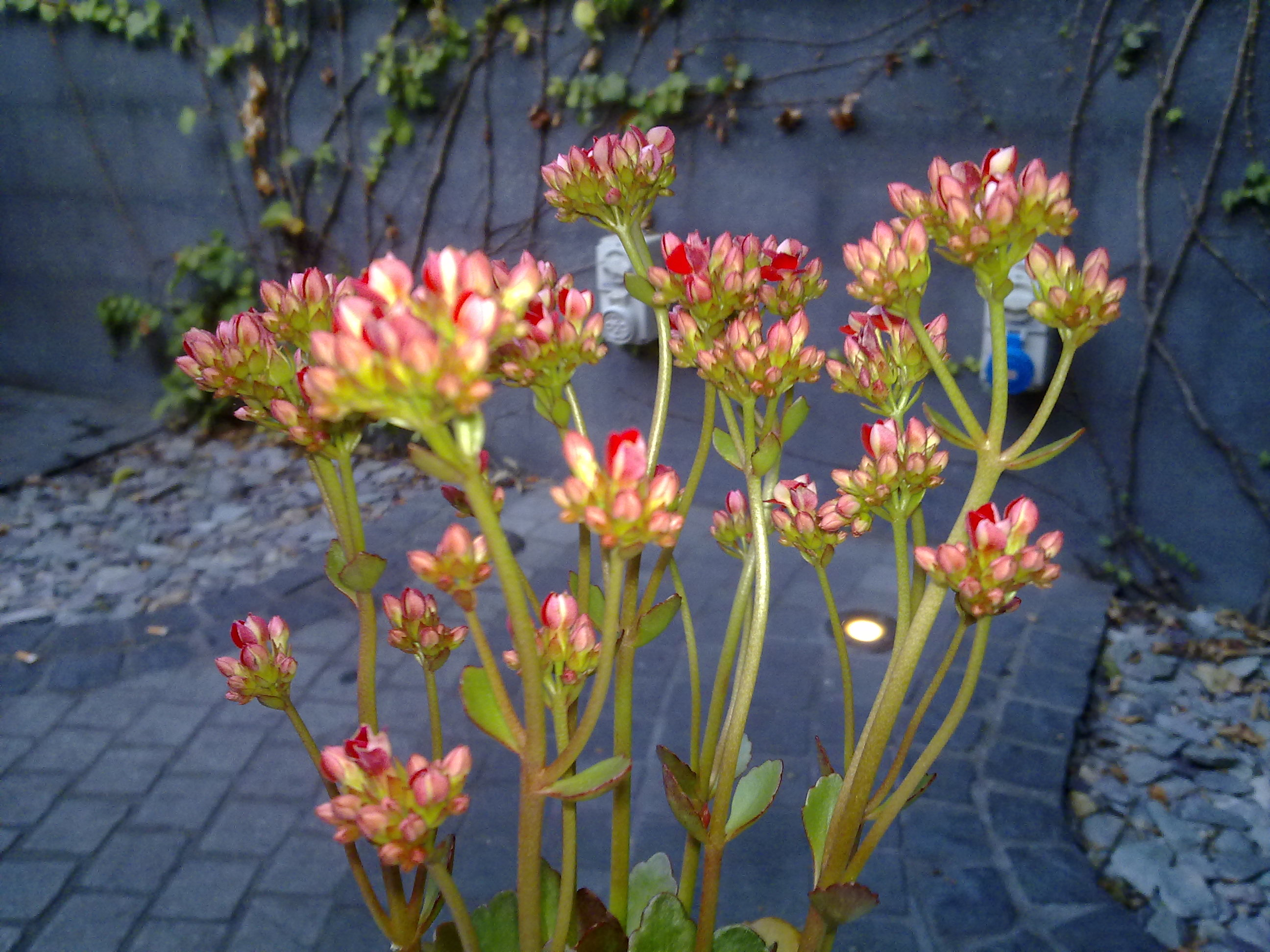 Pot plant at the Beresford Hotel