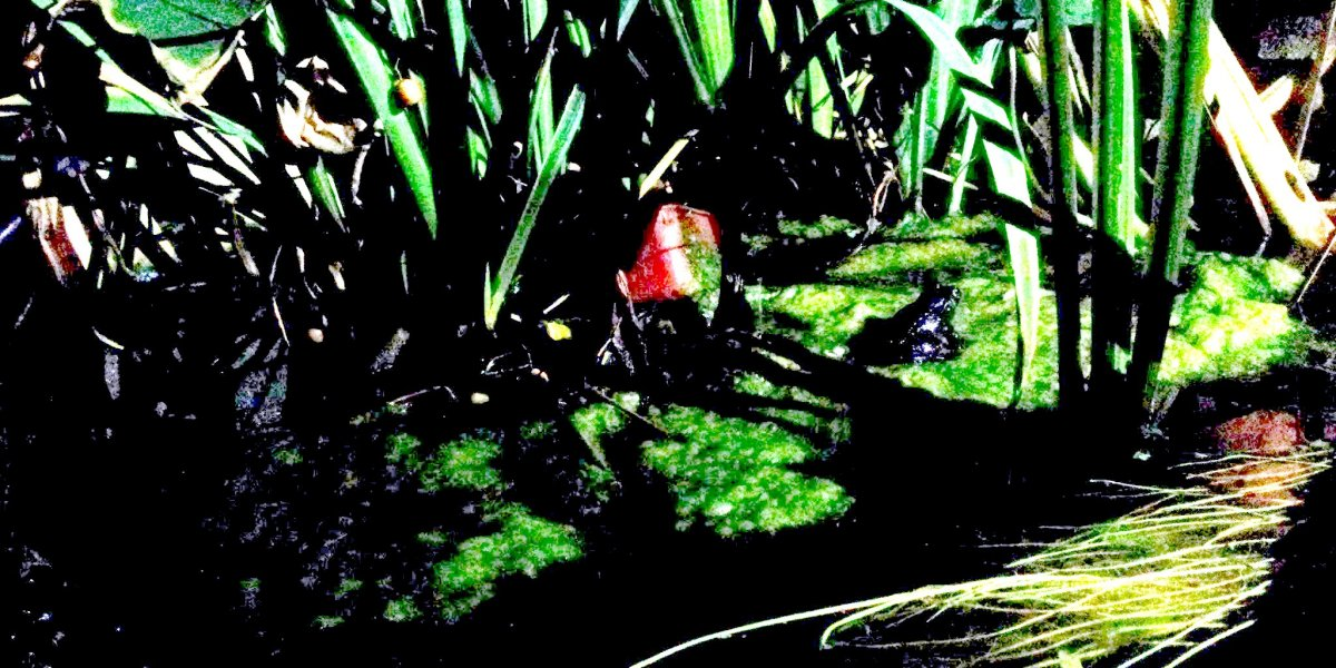 The Motorbike Frog
