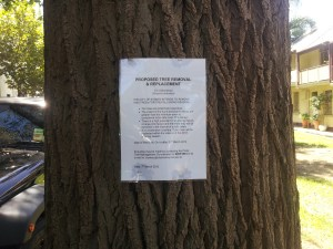 Tree Removal Order