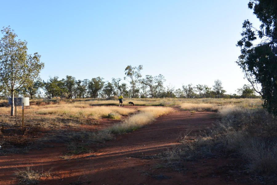 Coolabah Roadside, NSW