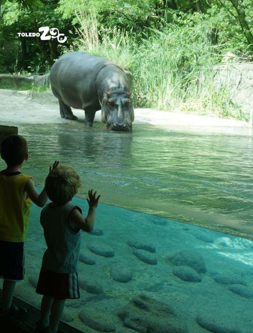 Toledo Zoo Was Heaven James Callahan