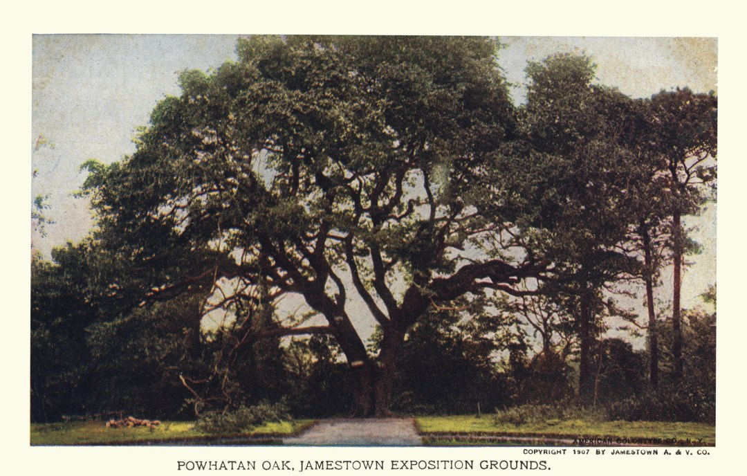 06PCJamestown Exposition00182 - Powhatan Oak copy
