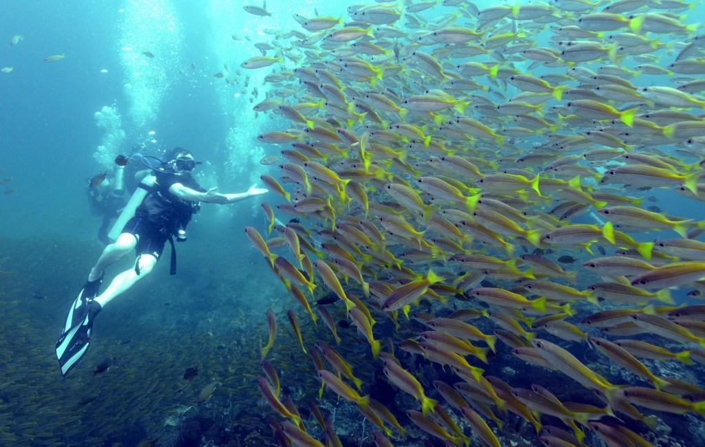 Diving Ko Phi Phi . Thailand