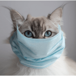 cat-for-covid-mask