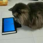 保護猫ソラ【毛玉日記】#14