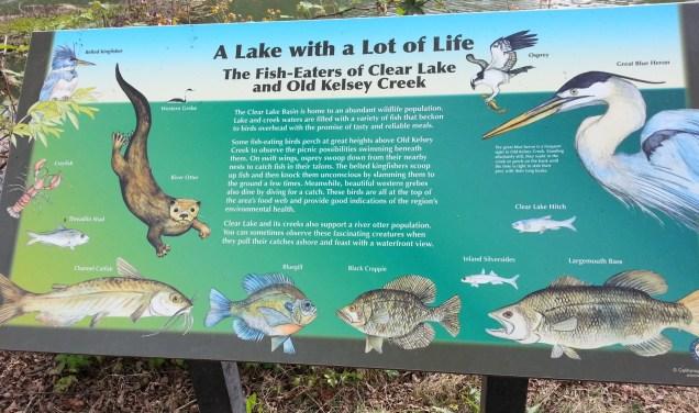 The lake life cycle