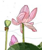 lotus budsc