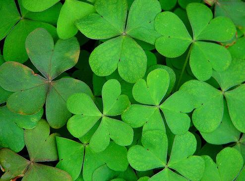 St. Patrick's Day (1/2)