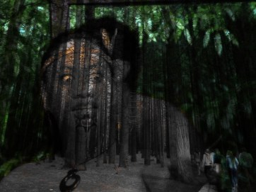 Redwood Stare