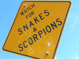 Watch-for-snakes-and-scorpions