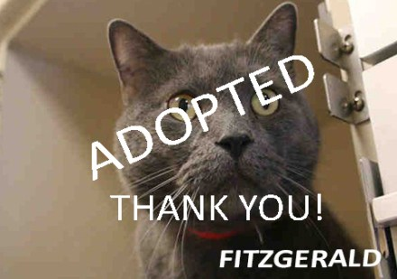 Fitzgerald adopted1