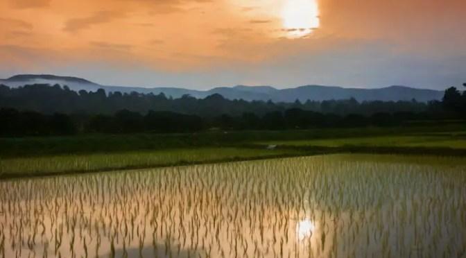 Rice painting