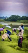 22 seedling gatherers make light work of the job