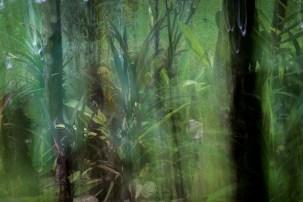 Forest Shade III