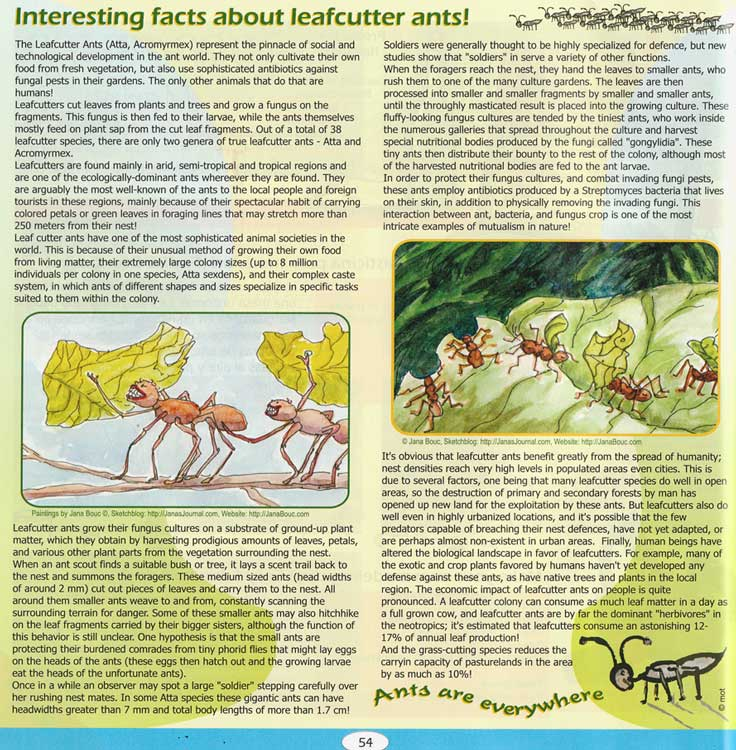 "Leafcutter Ants, in ""Zoom"" (Costa Rica magazine)"