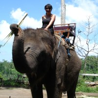 Would you ride an elephant in Bali?
