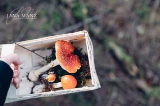 fliegenpilze-herbst-naturfotografie-jana-maenz