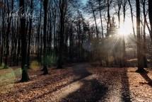 Fotoreise - Fotografieworkshop - Rügen, eine Winterreise