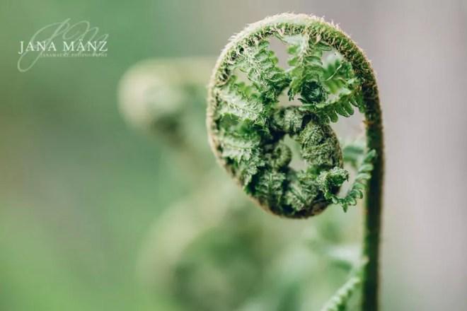 Sinnliche Naturfotografie & Landschaftsfotografie - Die Wunder der Natur