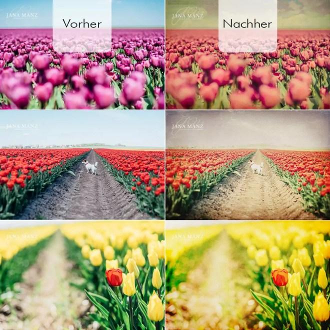 Blumen, Tulpen, Tulpenfelder, Deutschland, Schwaneberg, Magdeburger Börde, Sachsen-Anhalt, Texturen, Workshop, Bildbearbeitung, Lightroom, Workshop
