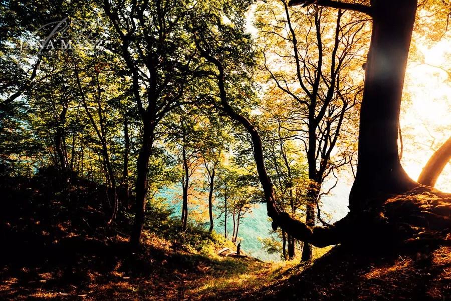 Fotoreise, Fotoschule, Herbst, Herbstfärbung, Insel, Landschaftsfotografie, Mecklenburg Vorpommern, Meer, Naturfotografie, Ostsee, Rügen, Strand, wirsindinsel, Workshop