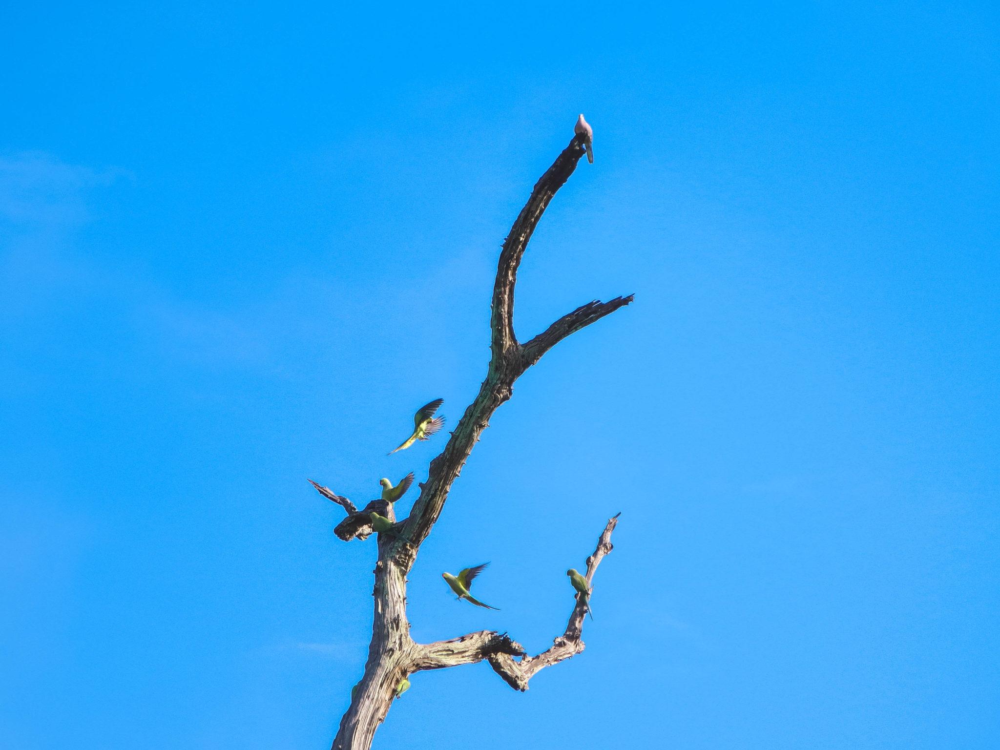 jana meerman uda walawe safari sri lanka-10