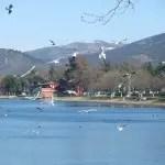 Kachelshopping in Iznik