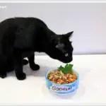 Alles für die Katz': Selbstgekochtes Futter