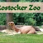 Besuch im Rostocker Zoo