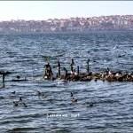 Turkey Tuesday: Küçükçekmece