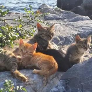 Istanbul street cats