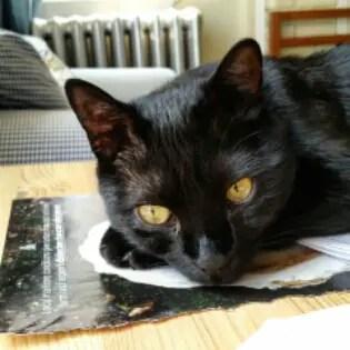 Canavar, black cat