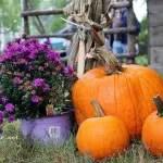 Travel: Salem Spice Festival
