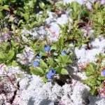 Wild Blueberry Picking on Whitecap Mountain