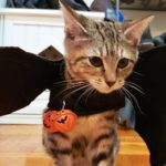 Happy Halloween 2020 – The Kitten Edition
