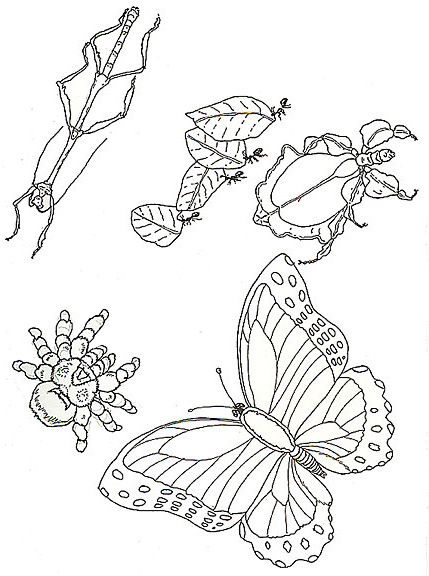gudu ngiseng blog: coloring pictures of insects