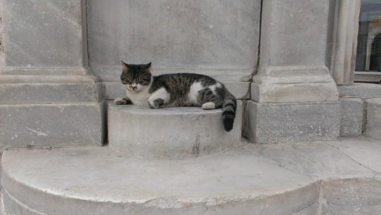 Aja mačka - Hagia cat