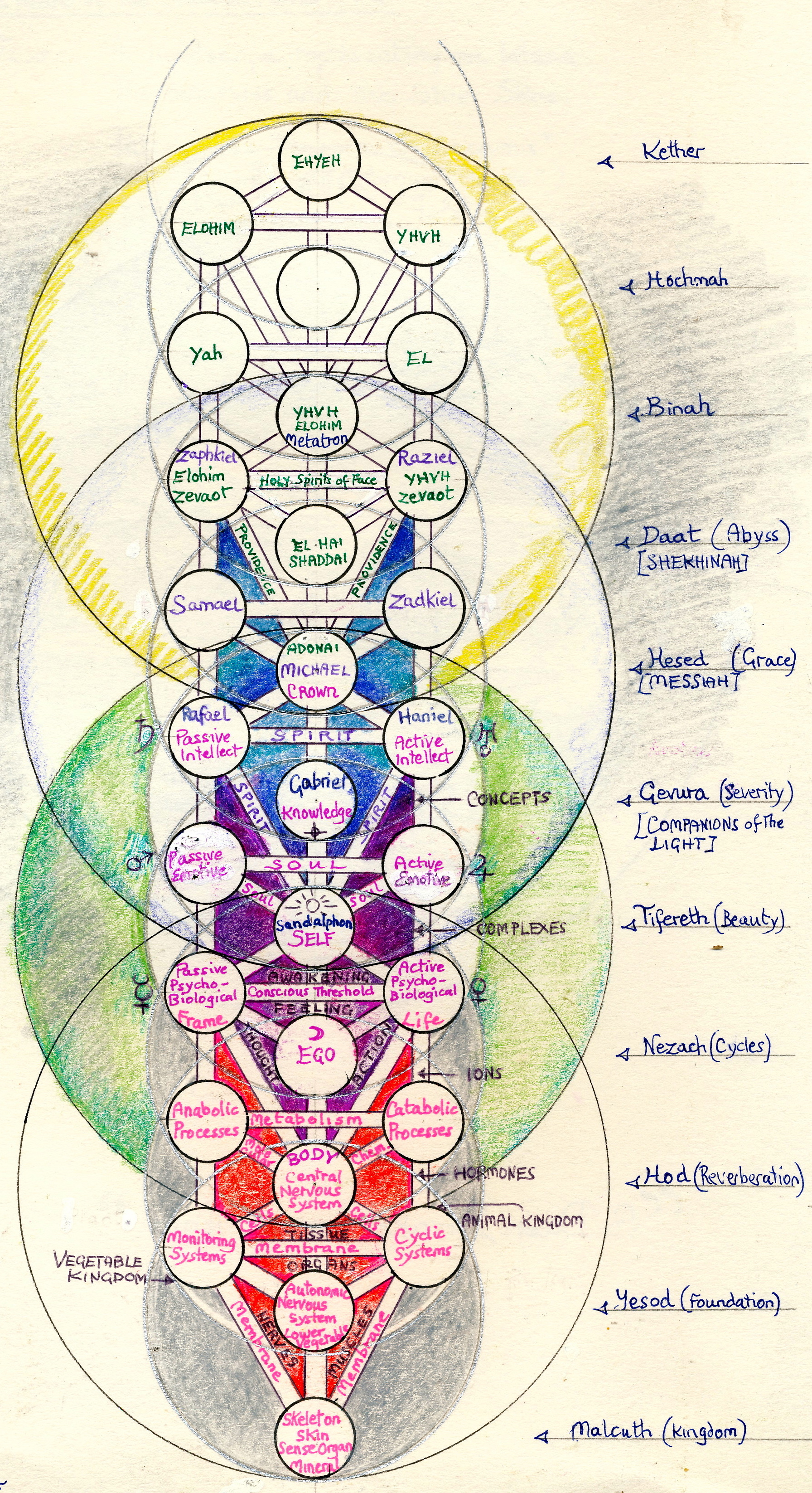 hight resolution of diagram of 12 chakra