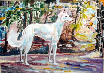 Saluki in the forest