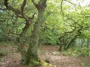 10 young oak dancers 2