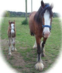 When I revisited Broomlands, these horses were there. I was touched to find my fervent wish in the 1950s, materialised.