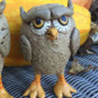 owlscup