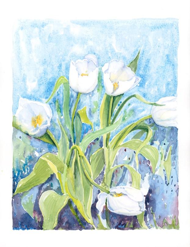 white tulip 2