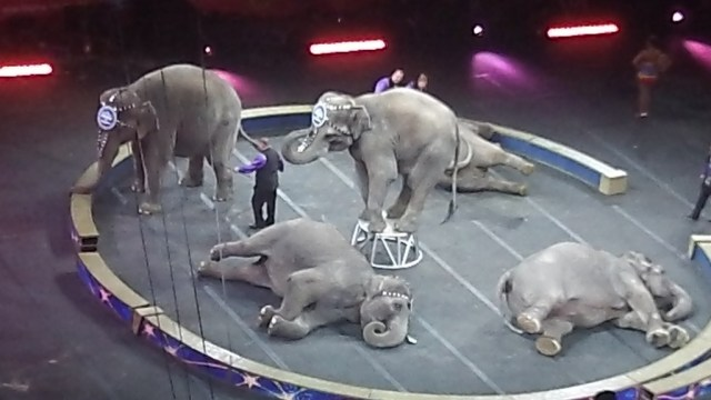 8 #spon ringling brothers elephants playing dead