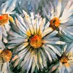 Daisies, Lt. Ed 12 × 16 – Giclee on Paper, $200