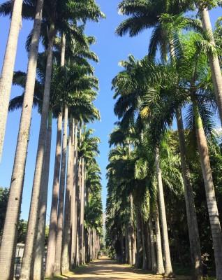 Den smukke palmeallé i Botanisk Have