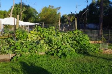 pumpkin patch 18 mar 17