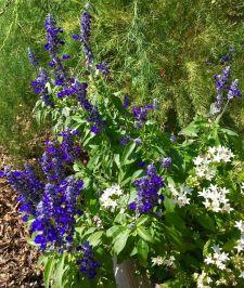 Flowers nearby