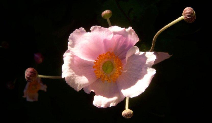 flowers4-b
